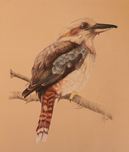 Kookaburra - Jennifer Lang