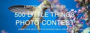 contest438_banner